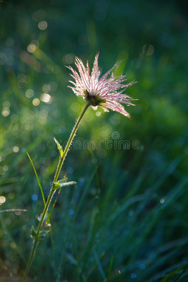 Flower in the summer fild stock photography