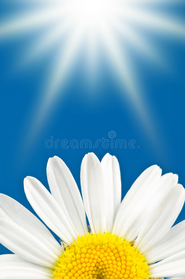 Flower and sun stock image
