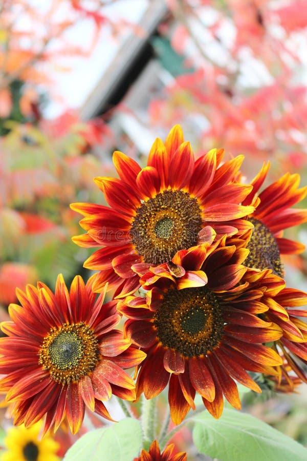 Flower, Sunflower, Flowering Plant, Petal Free Public Domain Cc0 Image