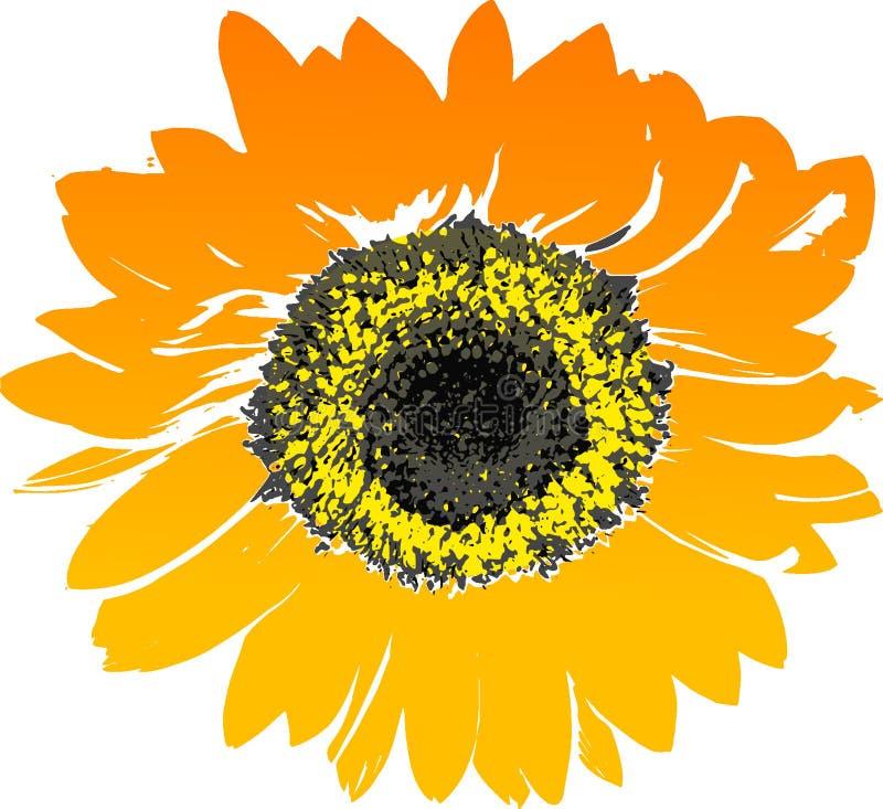 Flower, Sunflower, Flowering Plant, Yellow stock photography