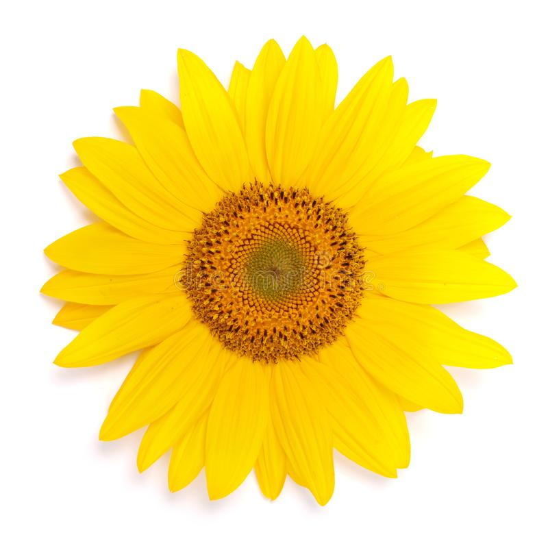 Flower of sunflower. Isolated on white background. Seeds and oil. Flat lay, top view stock photos