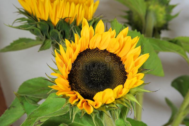 Flower, Sunflower, Sunflower Seed, Plant Free Public Domain Cc0 Image