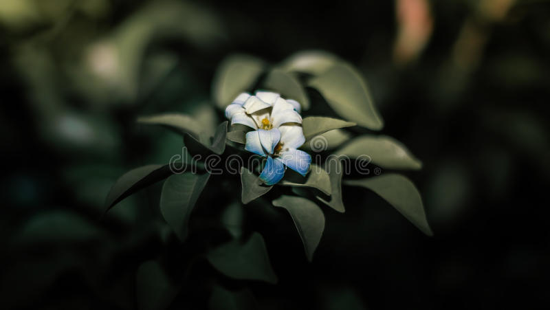 Flower of sunset royalty free stock image