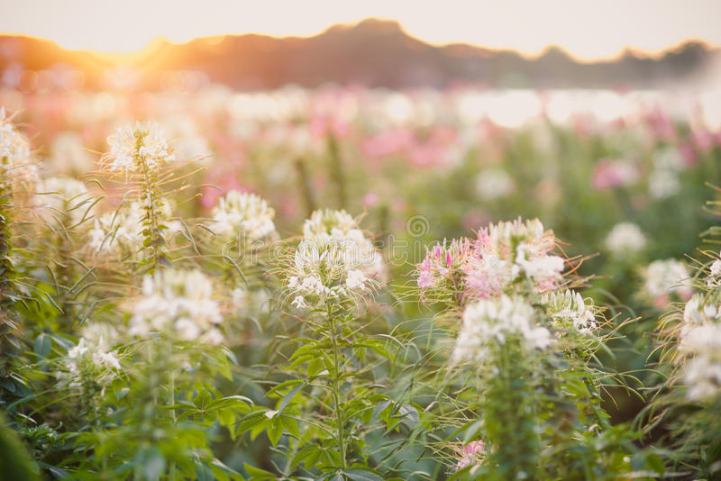 Flower and sunshine stock images