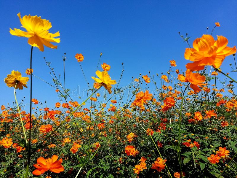Flower sunshine beautiful day. Yellow stock image