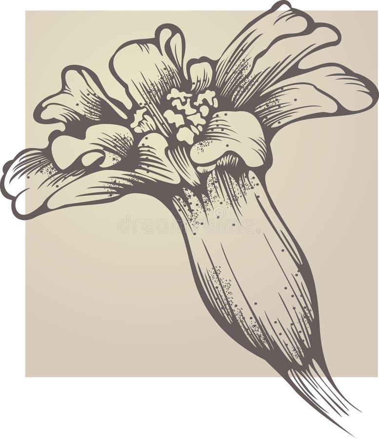 Free Flower Tagetes Patula Royalty Free Stock Photos - 22316128