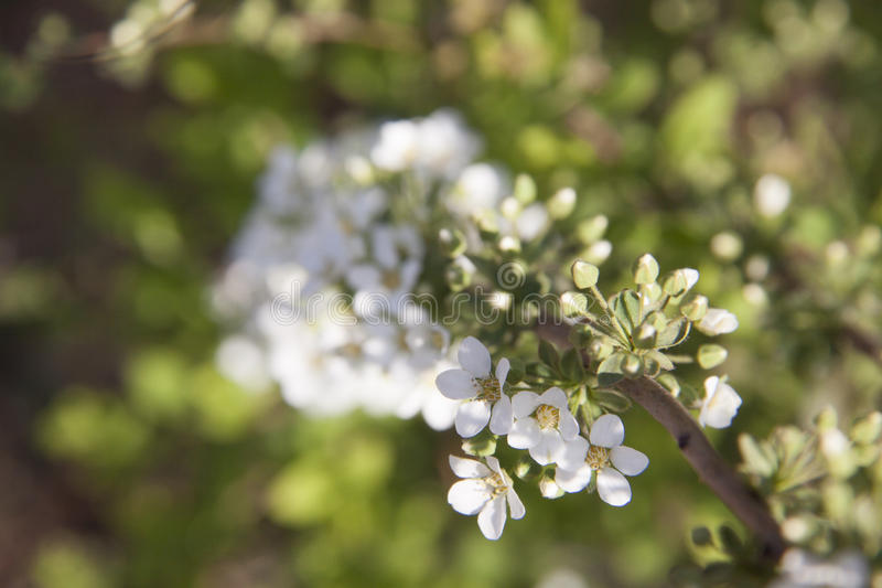 Download Flower stock photo. Image of great, fantastic, blossom - 39511076