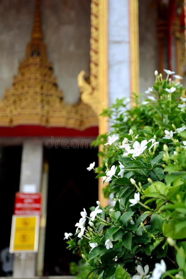 Flower of temple. In Thailand royalty free stock images