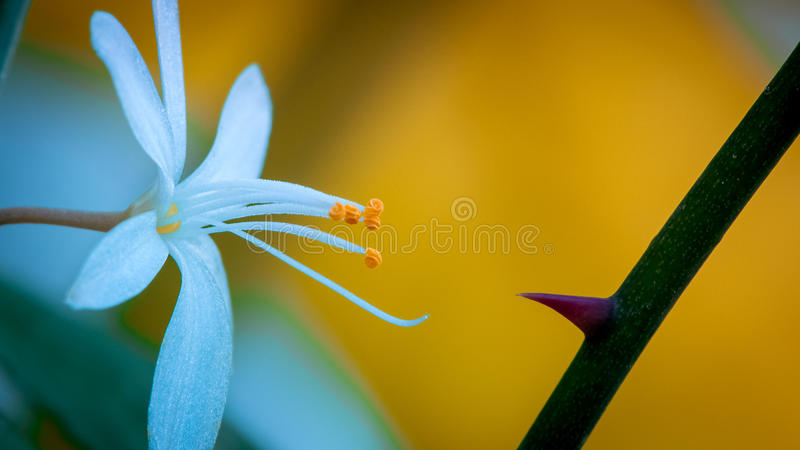 Flower and thorn stock image