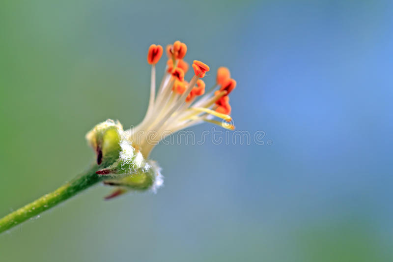Flower to aple trees. On abstract background royalty free stock photo