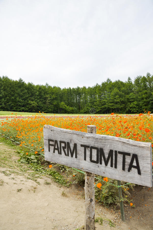 Flower in Tomita Farm Japan stock photography
