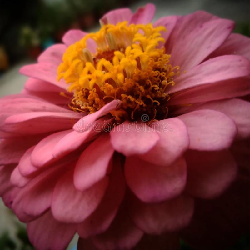 The flower touch royalty free stock images