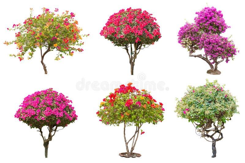 Flower tree royalty free stock photos