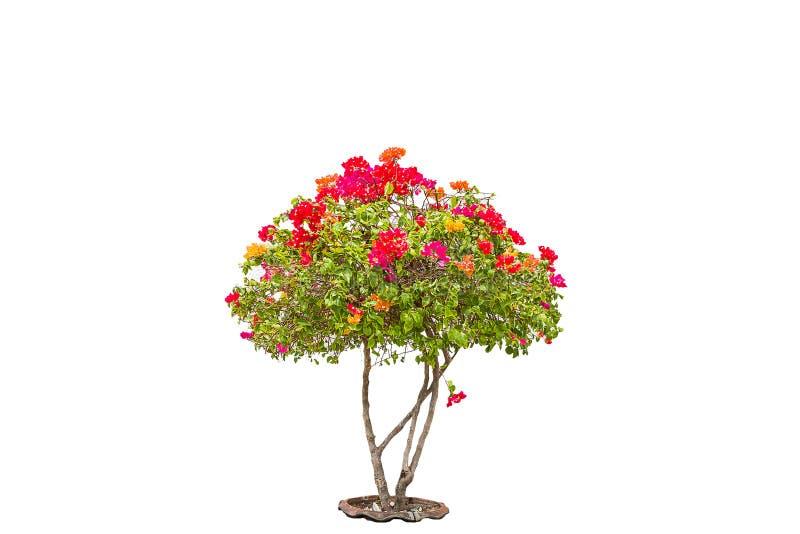 Flower tree royalty free stock image