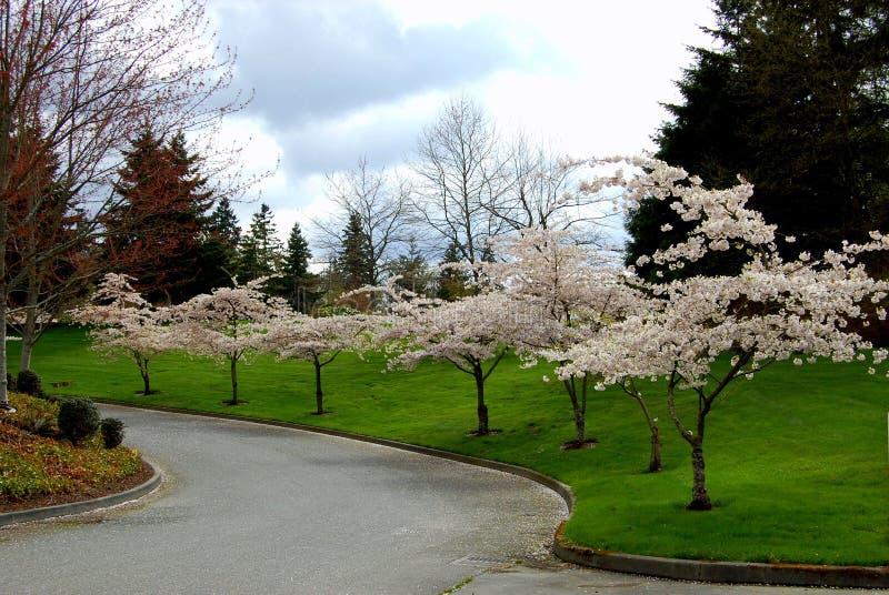 Flower trees royalty free stock photo