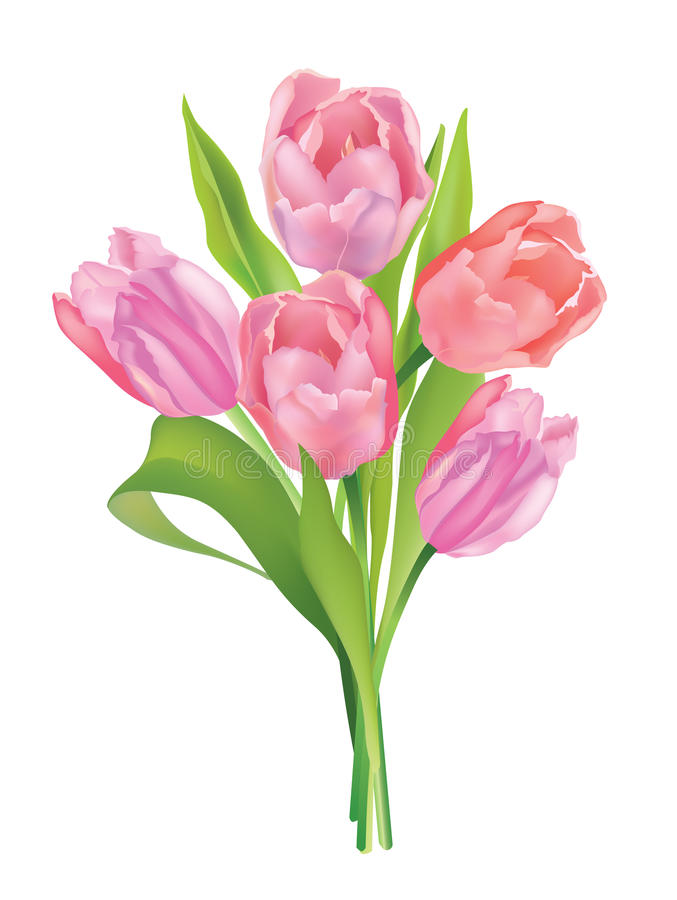 Download Flower Tulip Bouquet Isolated On White Background Stock Photo - Image: 33015546