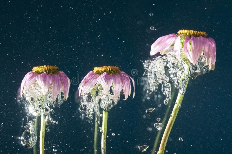 Flower uder water. Flower and bubbles in dark blue water royalty free stock photography