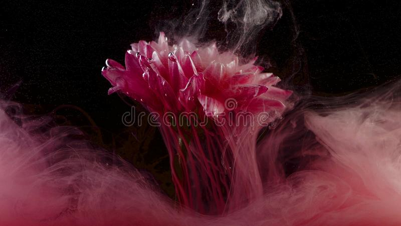 Flower under water and Splashes of colored ink, bright colors stock photos