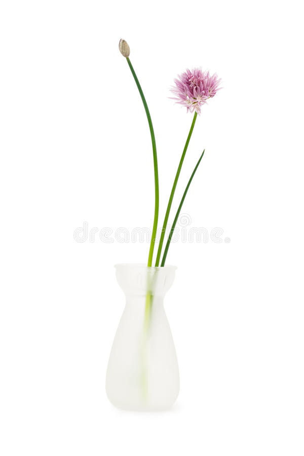 Download Flower in vase stock photo. Image of flowerheads, floral - 13093386