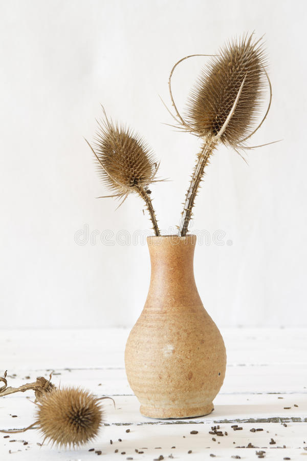 Free Flower Vase Stock Photos - 27719313