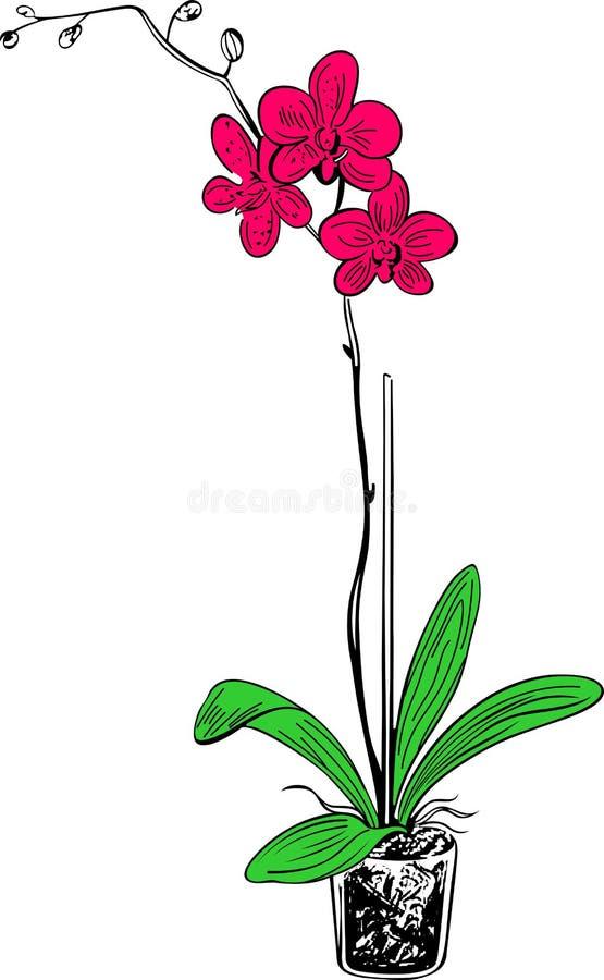 Flower vase pink, green and black mix stock illustration