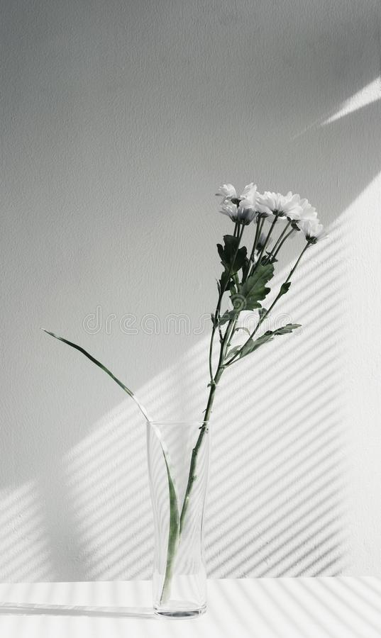 Flower, Vase, Plant, Still Life Photography stock image
