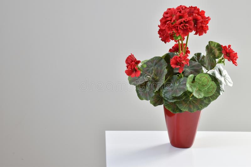 Flower vase of red color. Interior design beauty color green white and gray stock image