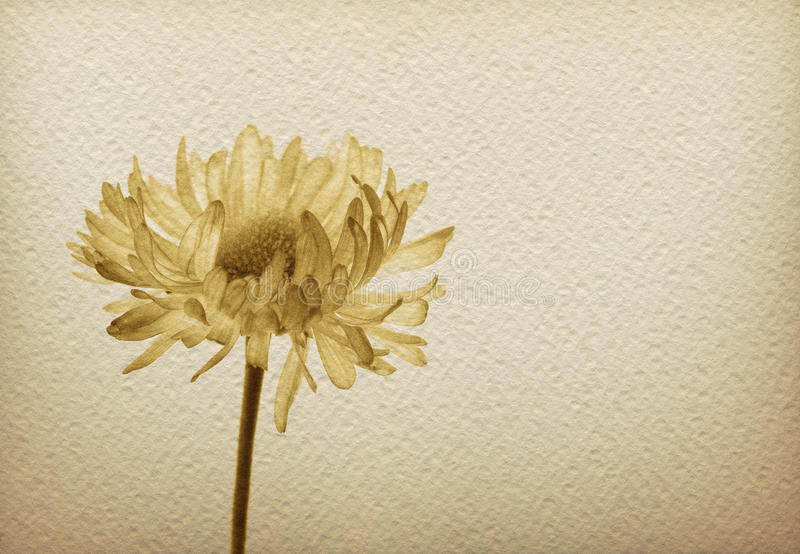 Flower on a vintage paper stock image