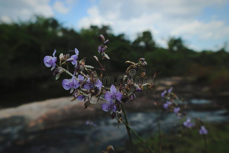 Flower violet forest tree green background pattern    ubonratchathani thailand royalty free stock images