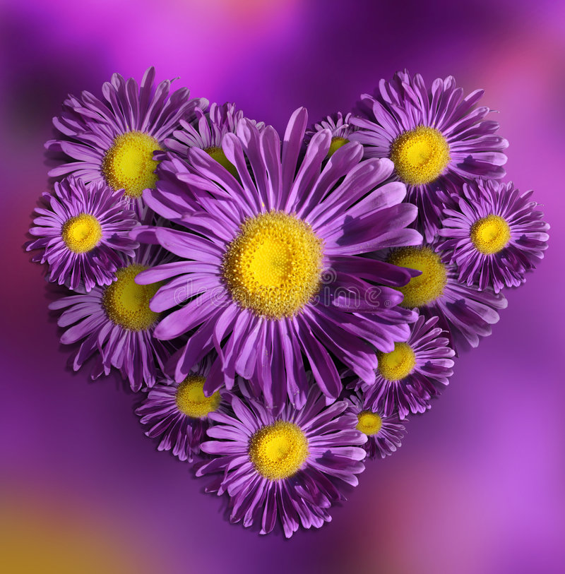 Flower violet heart royalty free stock photography