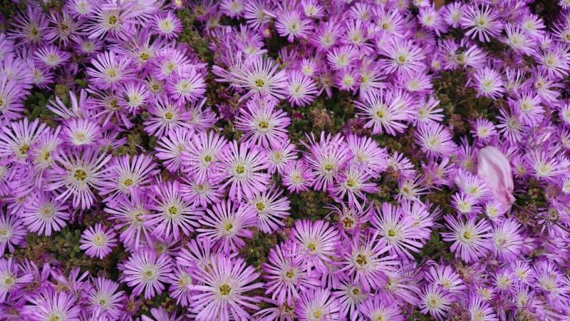 Flower violet stock image