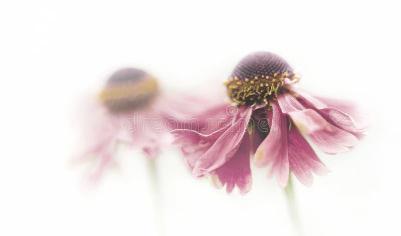 Flower, Violet, Purple, Close Up Free Public Domain Cc0 Image