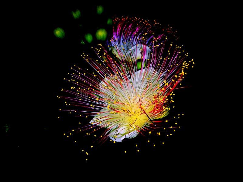 Flower_vivid imágenes de archivo libres de regalías