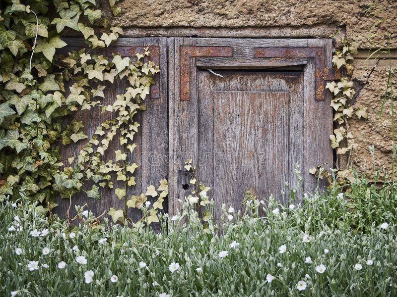 Flower, Wall, House, Grass royalty free stock image