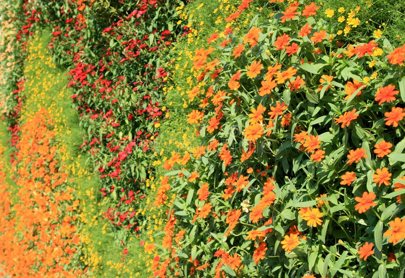Flower wall vertical garden royalty free stock images