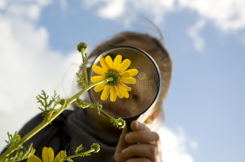 Download Flower watching stock photo. Image of student, searching - 24202664