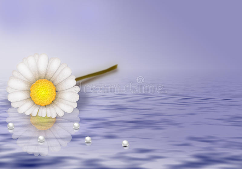 Flower On Water Stock Photos