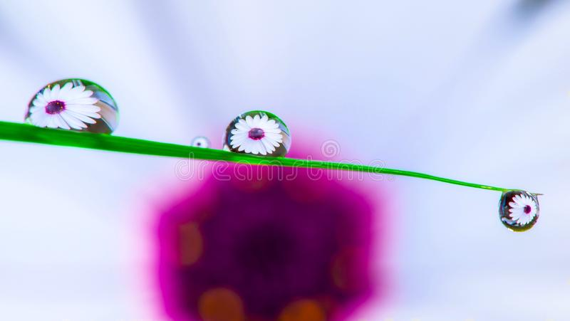 Flower through water droplets royalty free stock photography