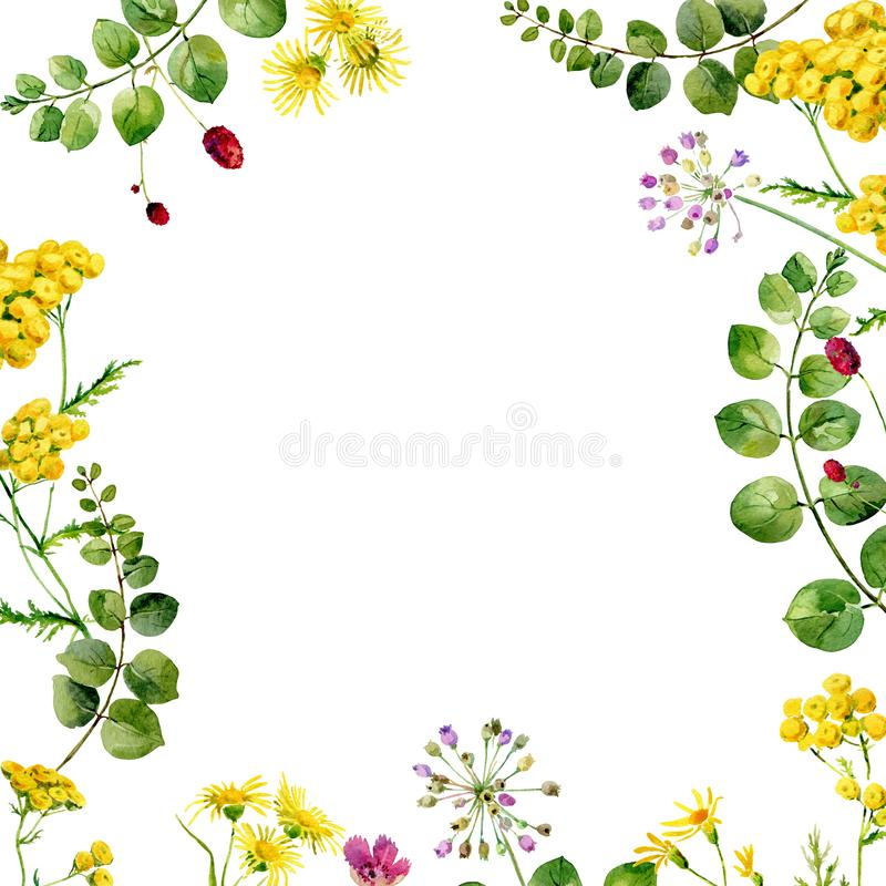 Flower watercolor frame royalty free stock photography