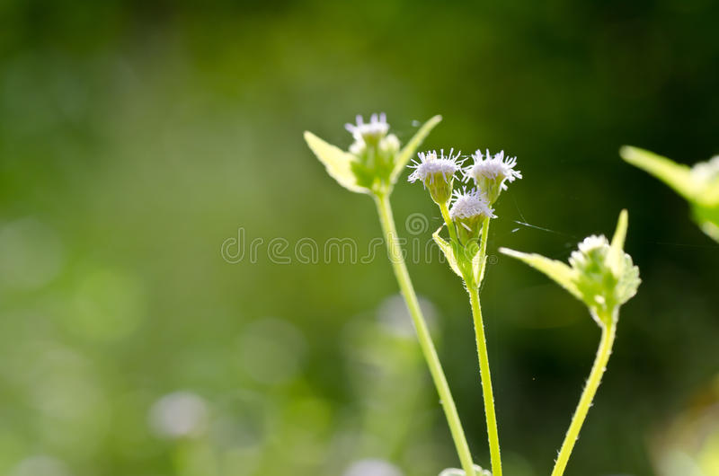 Download Flower Weed In Green Nature Stock Photography - Image: 23356542