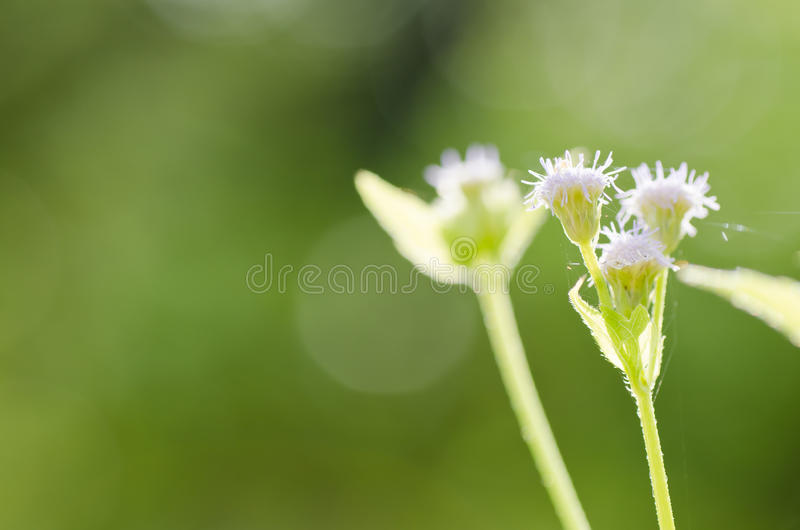 Flower weed in green nature