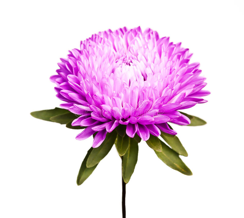 Download Flower on white background stock image. Image of macro - 27071165