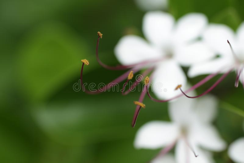 Flower white. Flower captured in lake at Coimbatore stock images