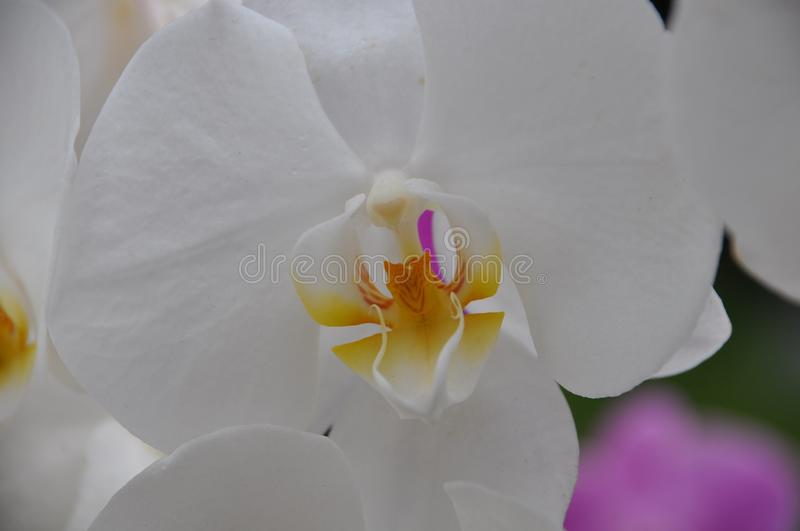 Flower, White, Flowering Plant, Yellow royalty free stock photo
