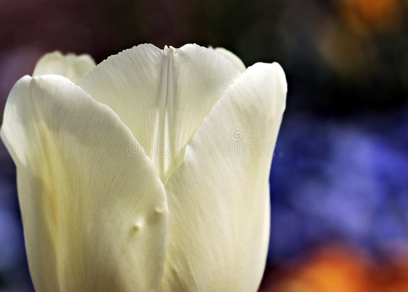 Flower, White, Petal, Close Up royalty free stock photos