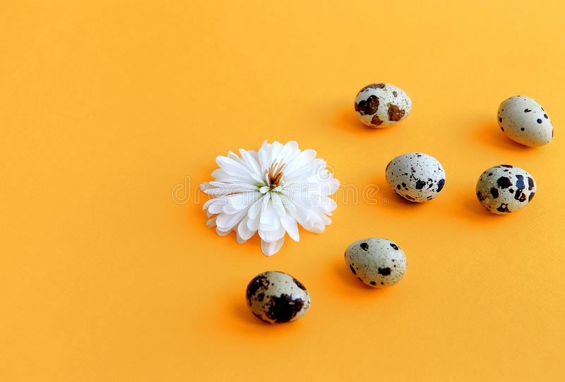 Flower with white petals and quail eggs stock photo