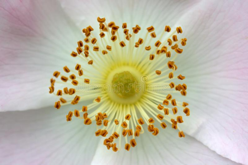 Flower, White, Yellow, Close Up stock photography