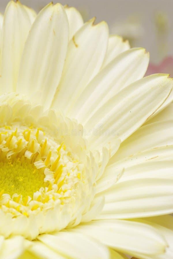 Flower, White, Yellow, Close Up stock photo