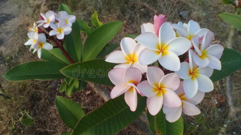 Flower. Whiteflower nature white beautiful royalty free stock image