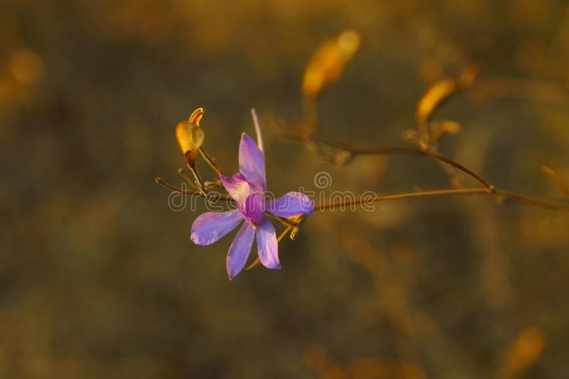 Purple flowers of autumn are blooming in the forest royalty free stock images